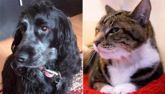Cane salva gatta abbandonata e intrappolata in una scatola
