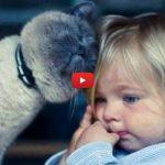 C'è sempre un buon motivo per avere un gatto! [VIDEO]