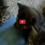 Donna torna a casa, apre la porta ed ecco un paradiso per gattini! [VIDEO]
