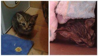 Bimbi salvano gattini. I genitori: «Li hanno accaduti per tutta la notte»