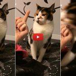 Ecco a voi il gatto più educato del mondo: odia i gestacci! [VIDEO]