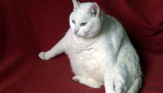 In Italia il 50 % di cani e gatti è in sovrappeso