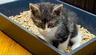 Perché il gatto inizia a correre dopo aver fatto la…cacca?