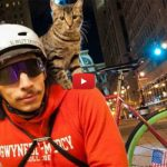 MJ, la gatta postina che non si separa mai dal suo padrone [VIDEO]