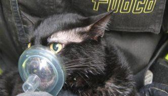 Casa in fiamme, gatto rianimato e salvato dai Vigili del Fuoco