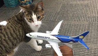 Gatta entra in travaglio in aereo e diventa la mascotte della compagnia aerea