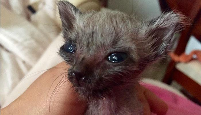 Si spenta nicoletta la gatta pipistrello - Contorno immagine di pipistrello ...