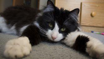 Le 10 ragioni scientifiche per vivere con un gatto