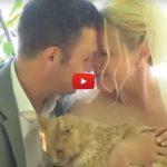 Si sposano, i testimoni di nozze sono più di 1000 gatti!