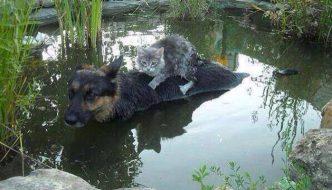 Dopo l'alluvione il gatto sta annegando, ma un angelo custode lo salva
