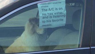 Lascia il cane in auto con un biglietto: quello che vi è scritto vi sorprenderà!