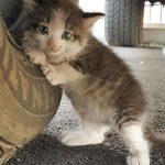 Trova una gattina sotto un camion e non resiste alla sua bellezza