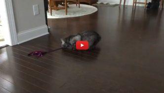 Trova un giochino per casa: la reazione del gatto è esilarante! [VIDEO]