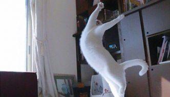 Fotografa il gatto di nascosto e lo scopre ballerino