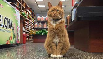 Bobo, il gatto-commesso che non prende mai le ferie
