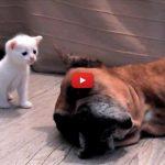 La seconda vita di Gina, la cagnetta che ha salvato una gatta e i cuccioli [VIDEO]