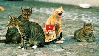 Una coppia aiuta a sue spese una colonia felina, ma cerca aiuto [VIDEO]