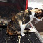 Paralizzata per le botte, gatta si trascina per tornare dai suoi cuccioli [VIDEO]