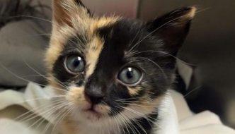 Spazzino salva gattina trovata nel camion dei rifiuti