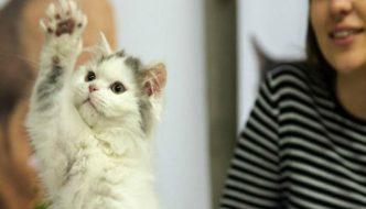 Esami di maturità: gatti in classe contro lo stress