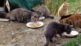 """Rifocillati gli otto gatti """"murati vivi"""""""