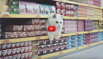 In Germania c'è un supermercato frequentato solo da gattini [VIDEO]