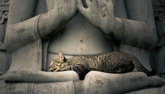 10 regole zen per vivere come un gatto