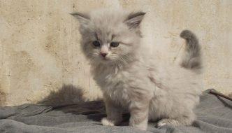 Lanciati da un'auto in corsa, gattini salvati miracolosamente da ragazzini