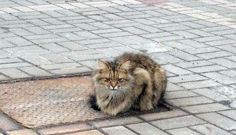 Il padrone lo abbandona, il gatto lo aspetta nello stesso posto da un anno