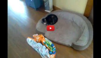 Entra in casa per cercare il suo gatto e trova il mondo alla rovescia [VIDEO]