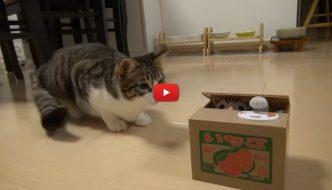 """Il gatto scopre un """"nuovo amico"""" dentro la scatola [VIDEO]"""