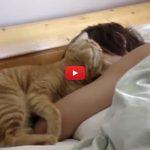 Il bimbo vorrebbe dormire, il gatto lo sveglia dolcemente [VIDEO]