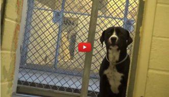 Il cane non trattiene l'emozione quando capisce di essere stato adottato [VIDEO]