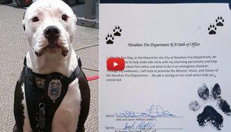 Jake, il cucciolo di cane salvato dalle fiamme e diventato pompiere [VIDEO]