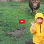 Leone attacca bambino in uno zoo [VIDEO]