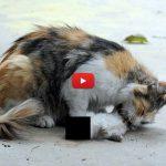 Mamma gatta cerca di rianimare i suoi piccoli uccisi da un folle [VIDEO]