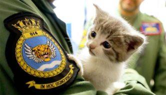 Pilota della marina trova un gattino: la caserma lo adotta!
