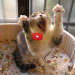 Gatti che fanno stretching, semplicemente stupendi! [VIDEO]