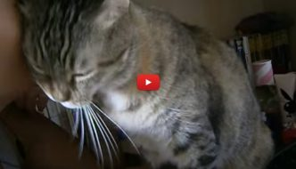 Giornata mondiale del bacio: anche i nostri gatti ci baciano! [VIDEO]