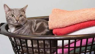 Gatto finisce in lavatrice e sopravvive al lavaggio