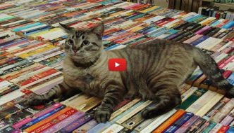 Il gatto Browser potrà rimanere nella sua biblioteca
