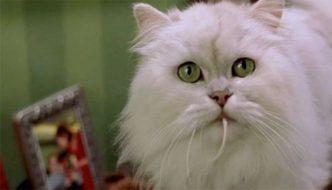 Riuscite a riconoscere questi gatti protagonisti di film? [QUIZ]