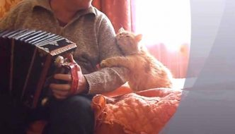 Il suo umano suona la fisarmonica: la reazione del gatto è dolcissima! [VIDEO]