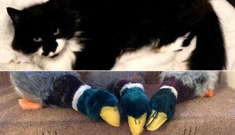 Milly, la gatta che ruba i peluche da coccolare