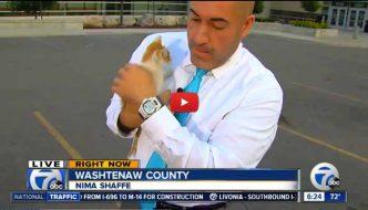 Gattina interrompe una diretta TV e viene salvata dalla strada [VIDEO]