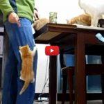 Gattini assaltano il loro umano: è arrivata la pappa! [VIDEO]