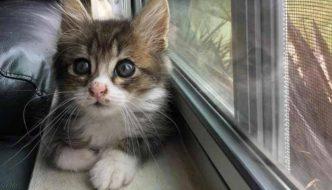 Unico superstite di una cucciolata: gattino rischia la cecità, ma accade un miracolo!