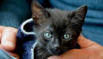 Coppia assiste all'abbandono di un gattino e lo adotta