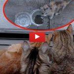 Gattino randagio mangia, ma a sua insaputa 10 occhi lo spiano [VIDEO]