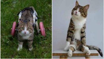 La vita del gatto Rexie oltre la disabilità